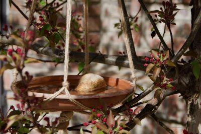 Vogeltränke im Baum ©meister.photos